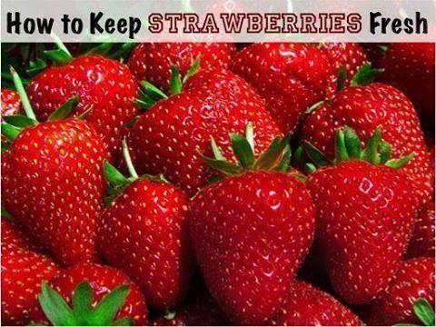 How To Keep Strawberries Fresh :)